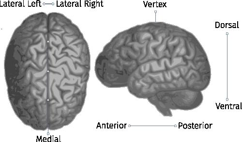 Locations in the Cranium