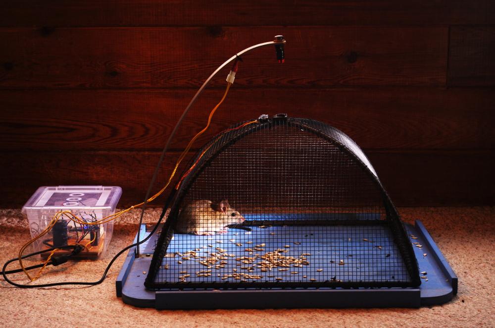 Smart Rat Trap Project In Make Magazine