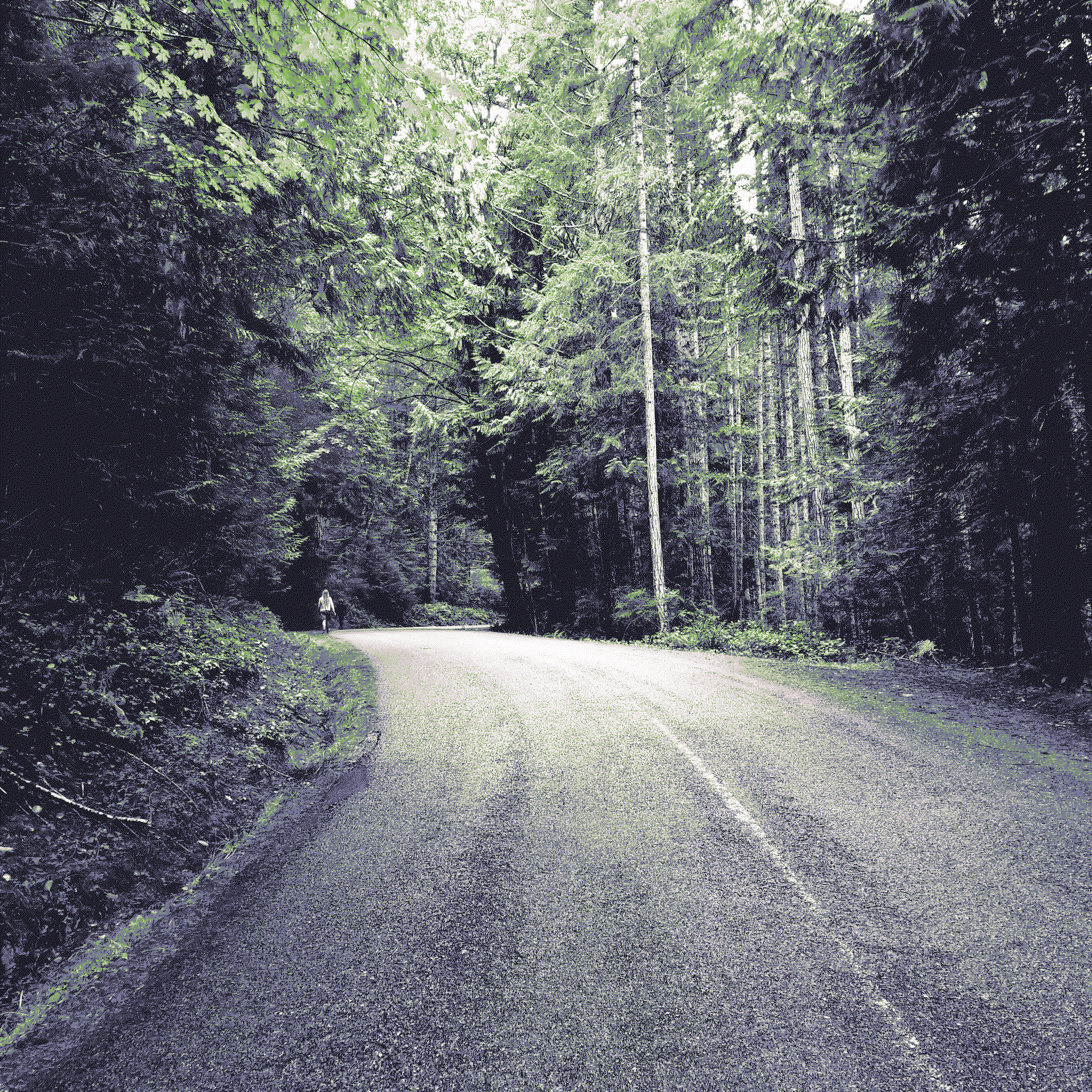 Arty dithered photograph of a runner on a misty road in the forest.